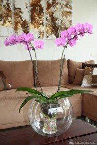 Orchidee im Fischglas