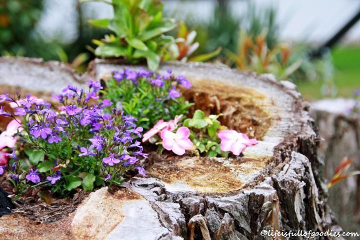 Bepflanzte Baumstümpfe