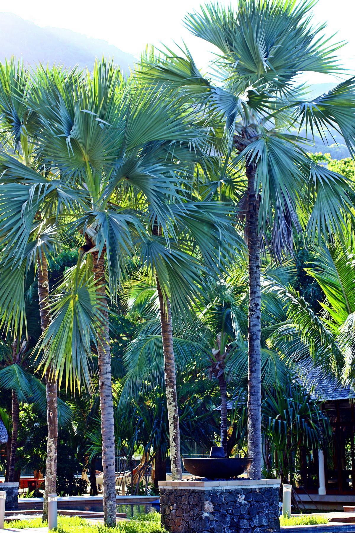 Mara´s Seychellen Trip