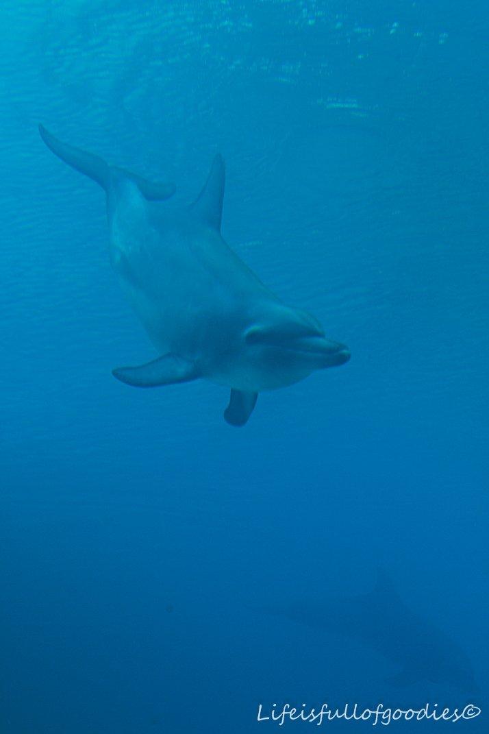 Noch ein Delphin