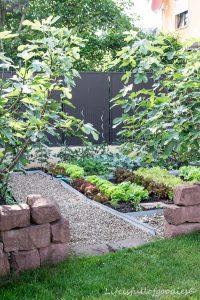 Mein Gemüsegarten – und warum Gartenarbeit schön macht
