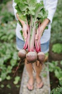 Ein Blick in meinen Gemüsegarten – Teil II
