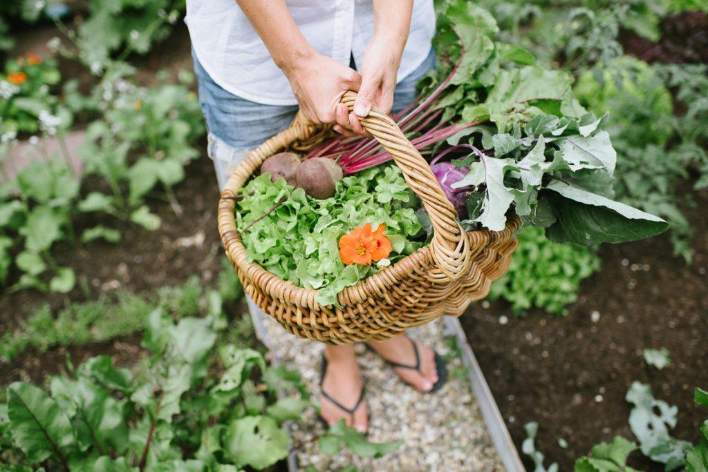 Gemüsegarten Teil 2