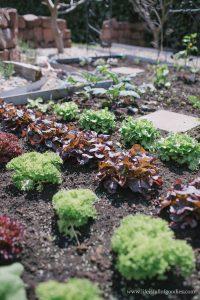 Ein Blick in meinen Gemüsegarten – Teil I