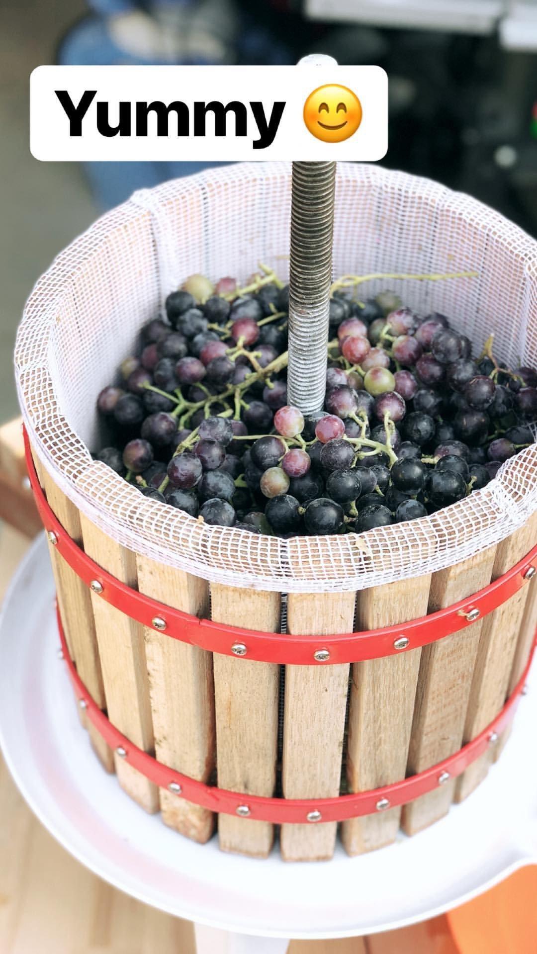 Traubenernte