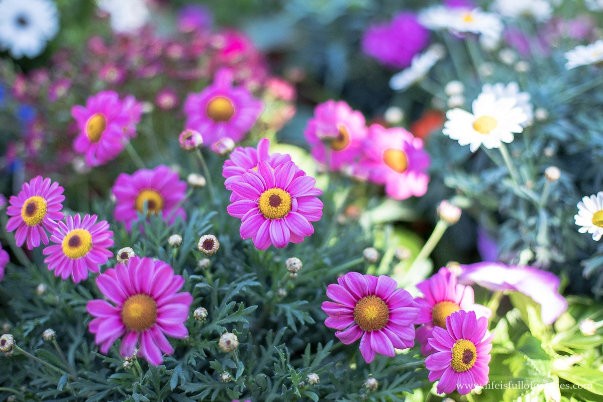 Blühpflanzen für unser Insektenhotel