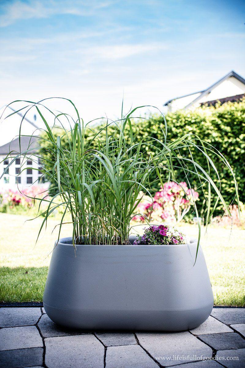 Neue Blumenkübel für drinnen und draußen von elho
