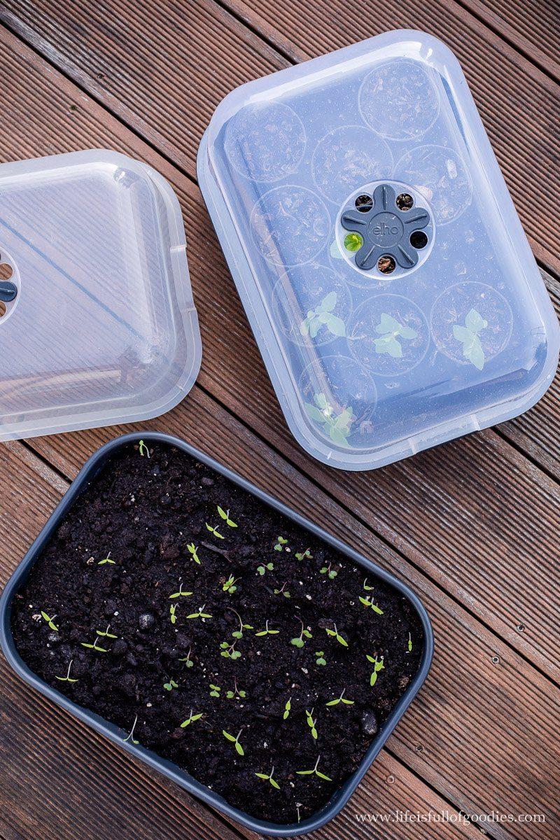 Wie man selbst Gemüse zieht - Tipps für die Anzucht