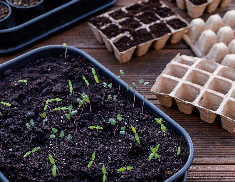 Wie man selbst Gemüse zieht – Tipps für die Anzucht