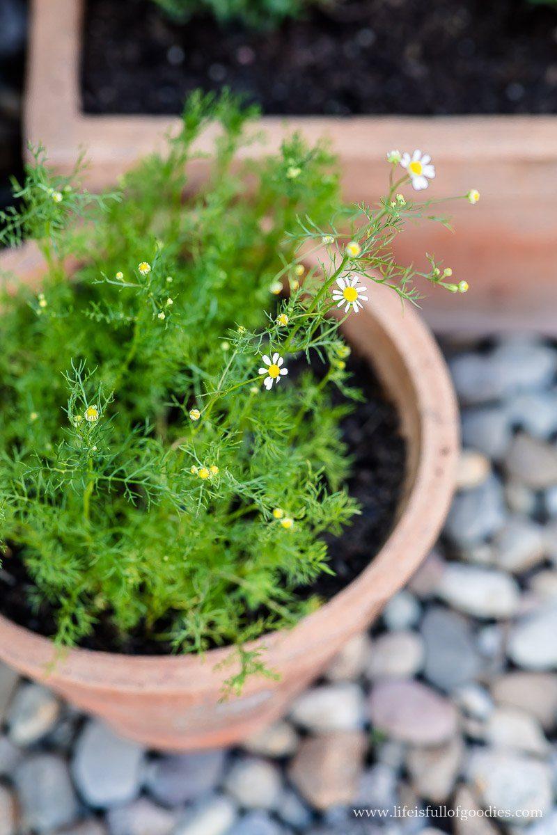 Wildblumen aussäen und anpflanzen